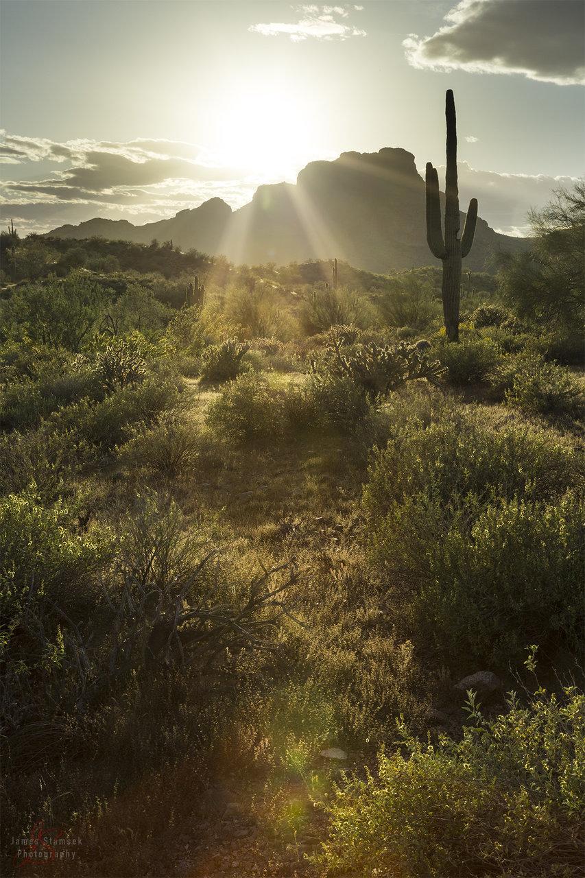desertportraitDONE.jpg