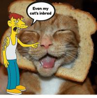 thumb_even-my-cats-inbred-memewh-ones-cletusspuckler-cletus-slackjawedyokel-slackjawed-14209968.png