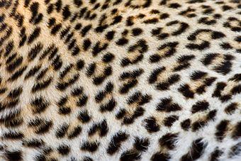animals-killed-for-skin.jpg