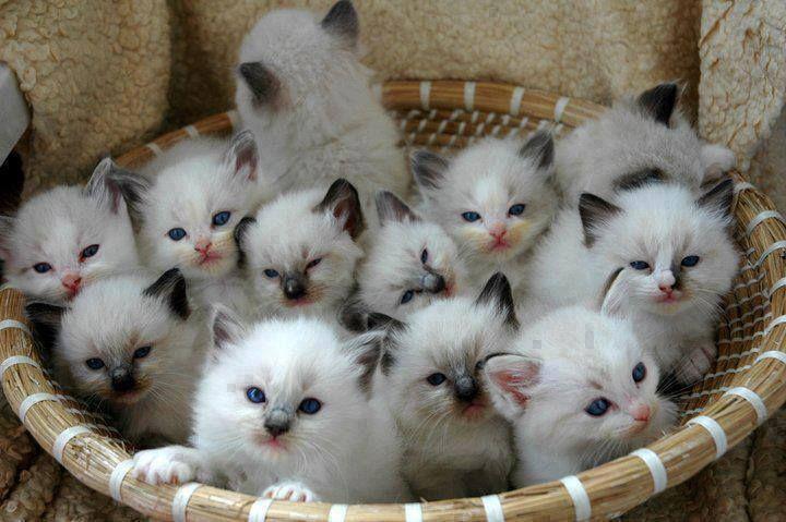 160993-Cats-In-A-Basket.jpg