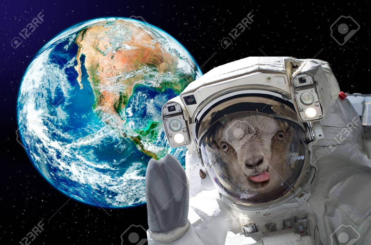 73845979-portrait-of-a-goat-astronaut-showing-tongue-in-space-on-a-background-globe.jpg