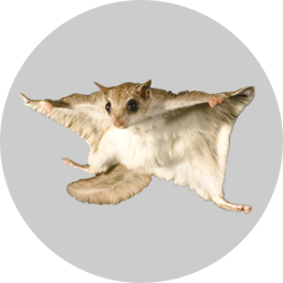 Badge_FlyingSquirrel.png