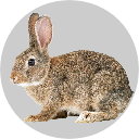 Badge_Hare.png