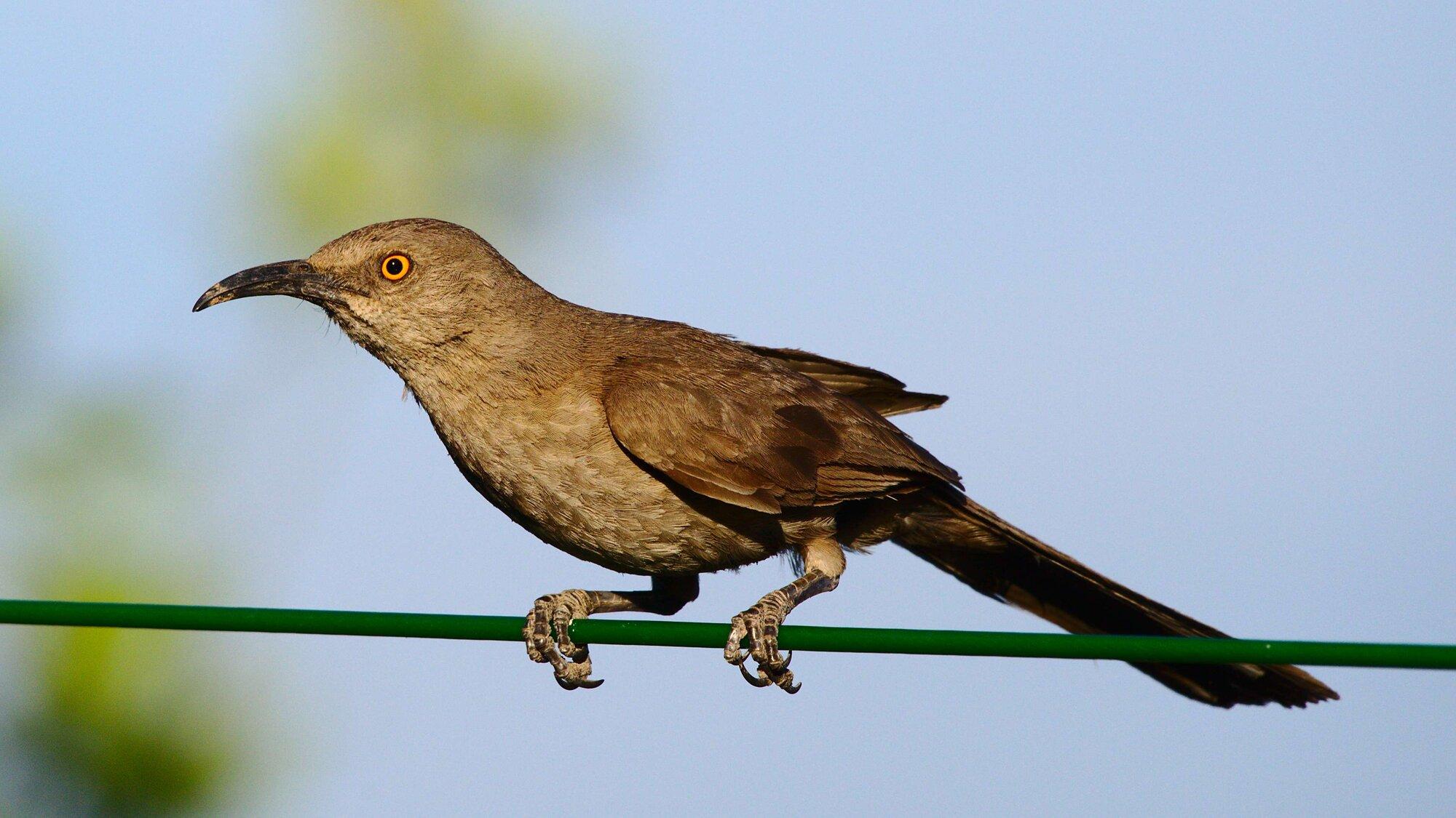 4k_bird_on_green_wire.jpg