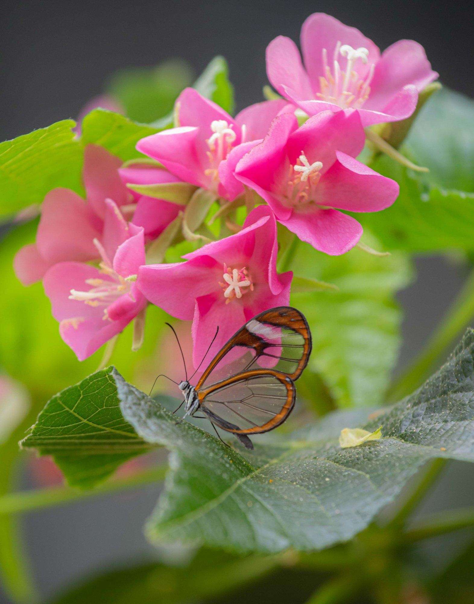 clear butterfly-2.jpg
