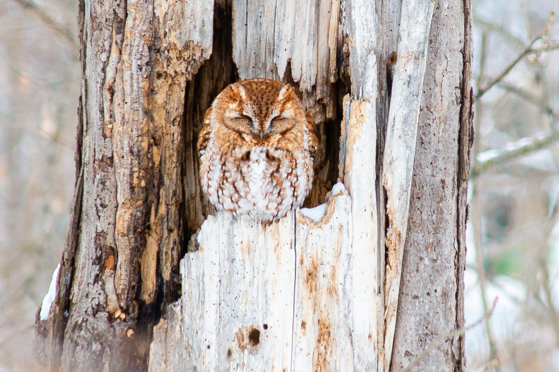 20200210 - owl.jpg