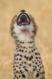 PAY-PROD-LAUGHING-ANIMALS1.jpg