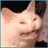 Kattstrumpa